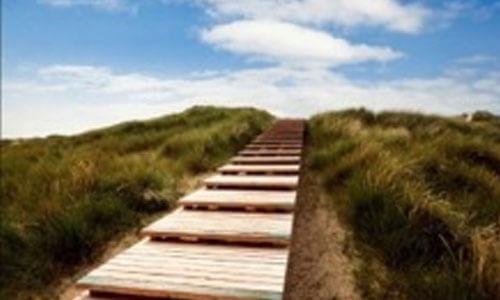 Holzweg, inmitten von Dünengras, der nach oben führt