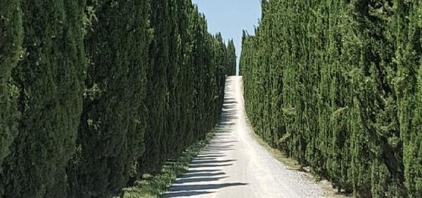 Mittig ein Weg umringt mit einer Baumallee